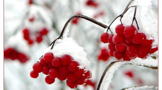Garten Winterfest Machen: Pflanzen überwintern - Tipps & Tricks Pflanzen Garten Im Winter