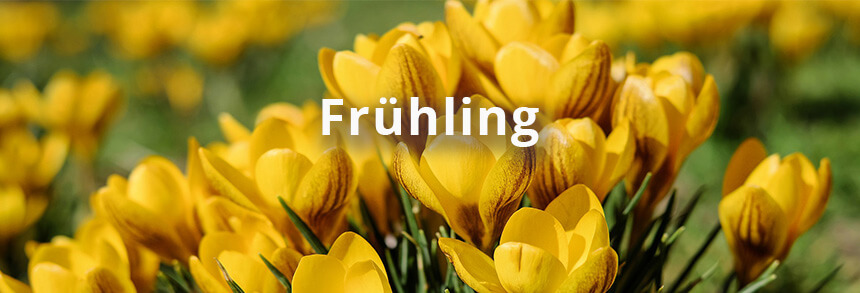Garten Frühling Umgraben Krokus Blumen