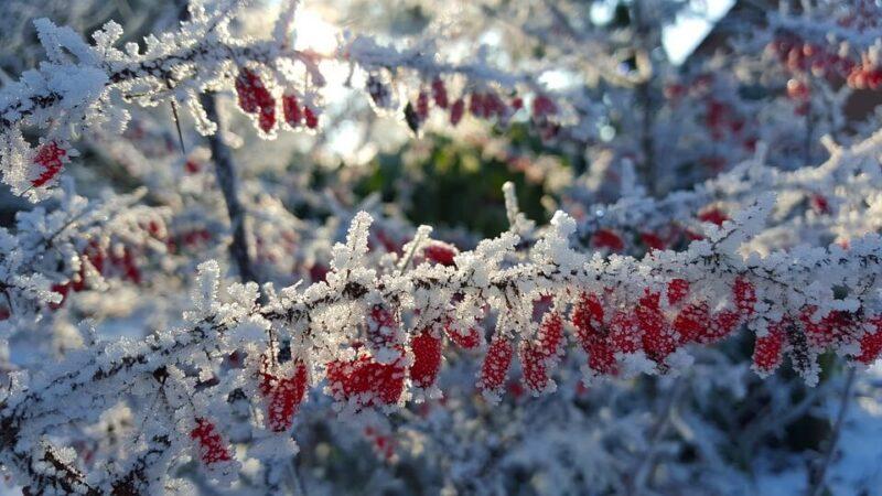 Pflanzen im Garten winterfest machen: Pflanzen überwintern