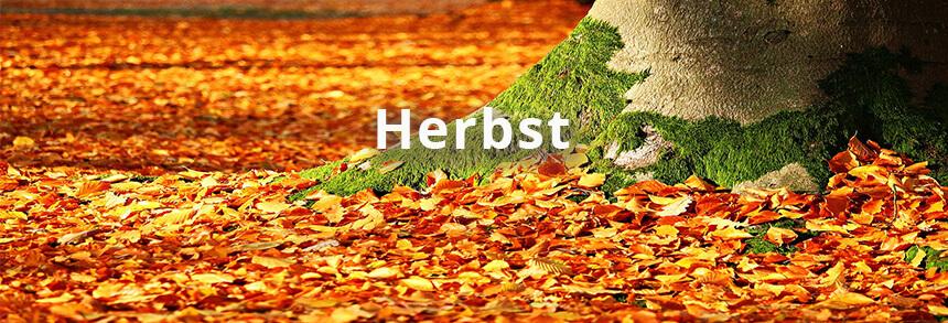Umgraben Herbst Laub Baumstamm