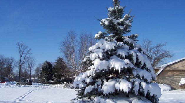 Weihnachtsbaum Selber Fällen.Weihnachtsbaum Selber Schlagen Wann Wie Wo