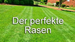 Rasenpflege Rasen Grün Garten Tipps