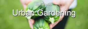 Trend. Urban Garden Definition Zucchini