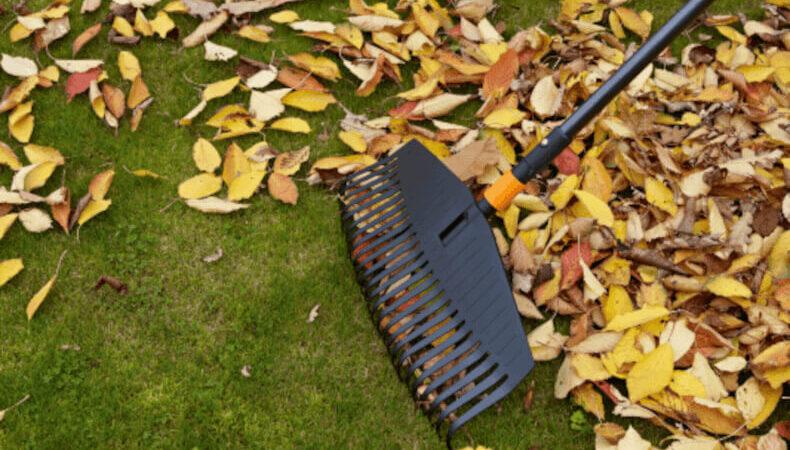 Gartenarbeit im Herbst: Von September bis Dezember