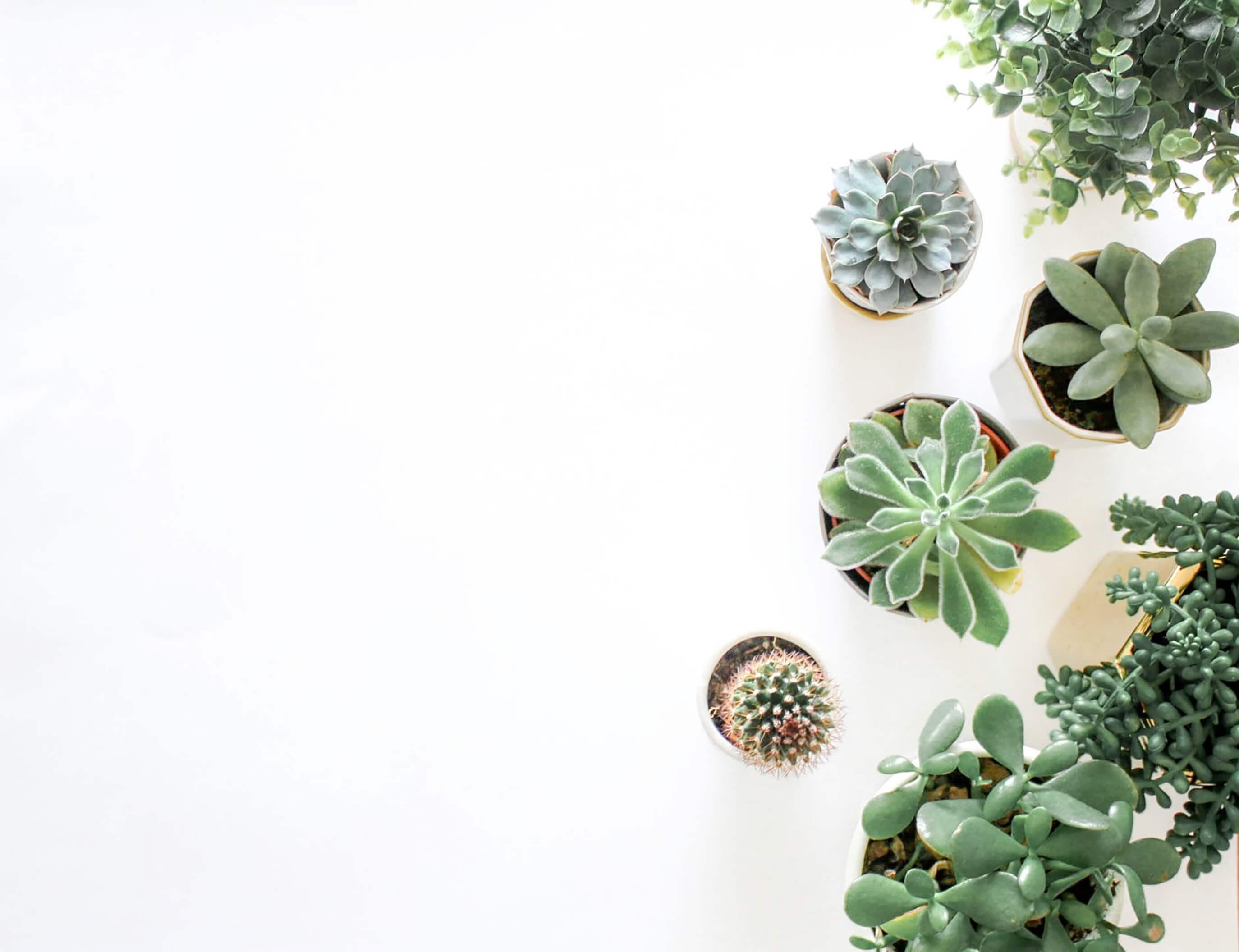 Pflanzen-Lampe: Sind Sukkulenten-Lampen der neue Trend?