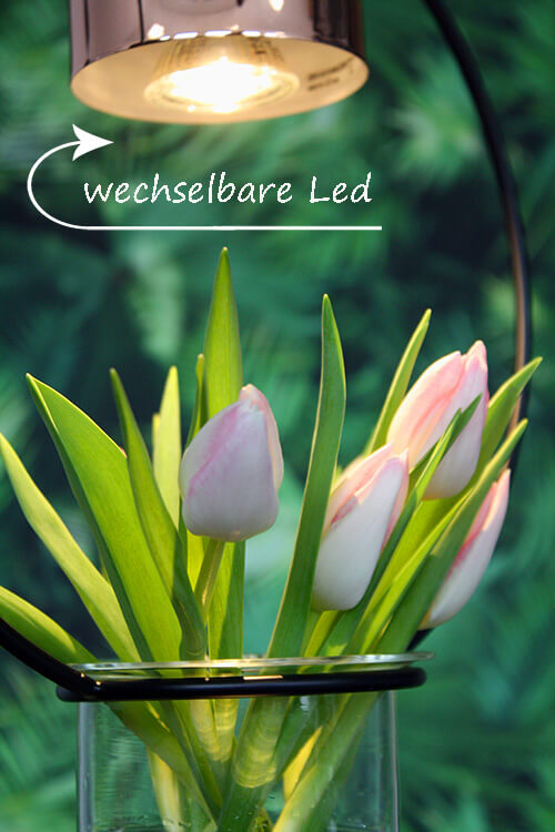 Pflanzen-Lampe LED