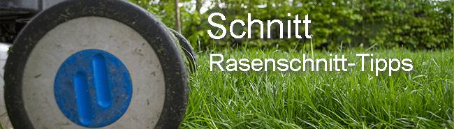 Rasenmäher Tipp Schnitthöhe