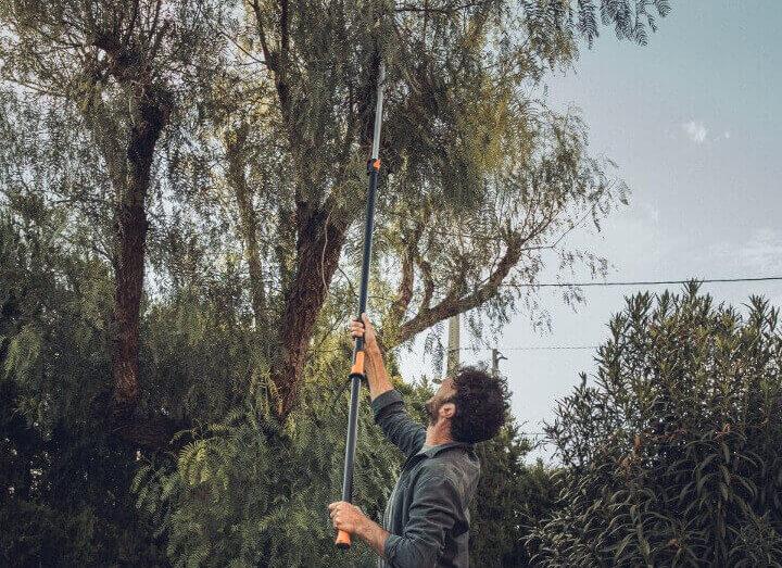 Der Baumschnitt