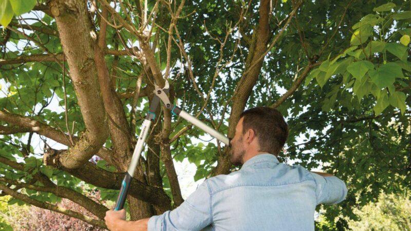 Obstbäume schneiden – darauf kommt es an