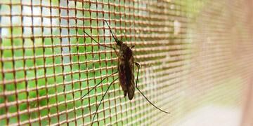 Insektenschutz Testbericht in unserem Blog