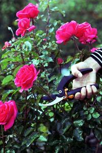 PowerGear Gartenschere mit Rollgriff