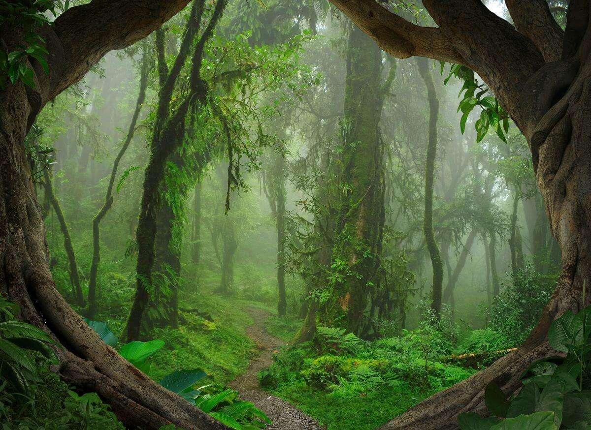 as creation designwalls tropical forest natur fototapete