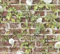 AS Creation Rot Backstein Rosen Papiertapete Authentic Walls 2 365721